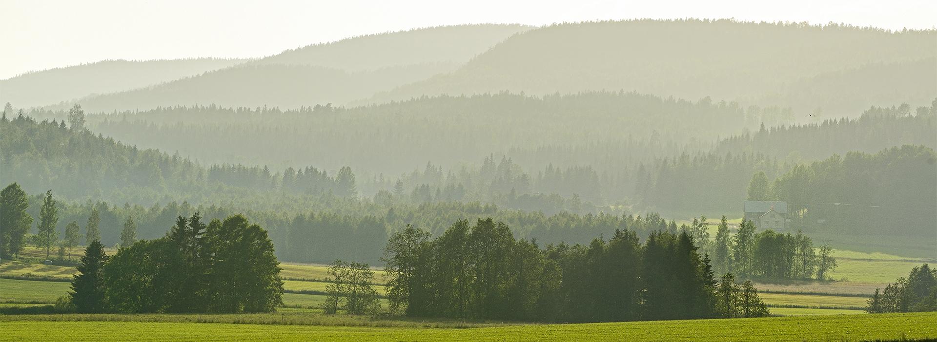Brattåsstiftelsens inriktning, Brattåsstiftelsen, skogsvetenskaplig forskning, skogsförvaltning