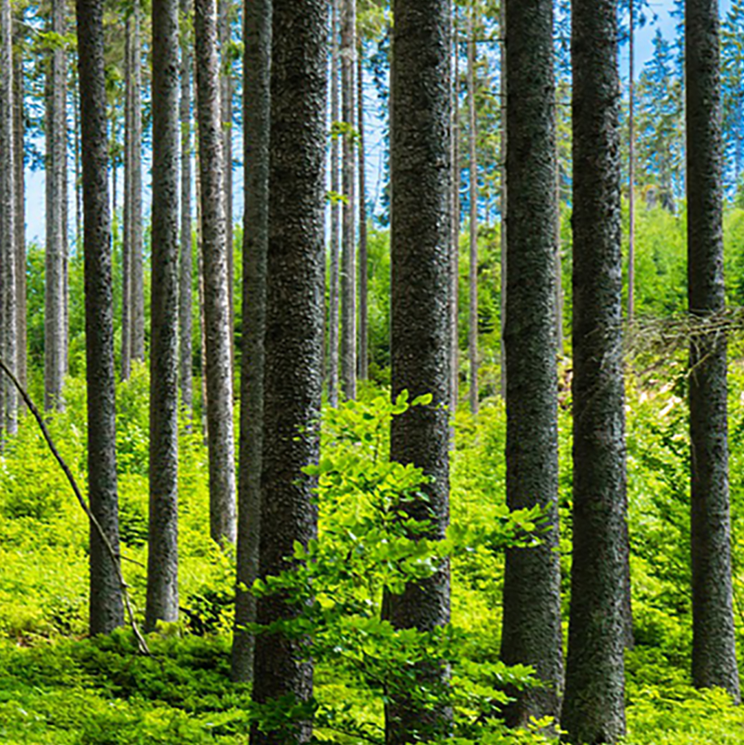 Brattåsstiftelsen, skogsvetenskaplig forskning, skogsförvaltning